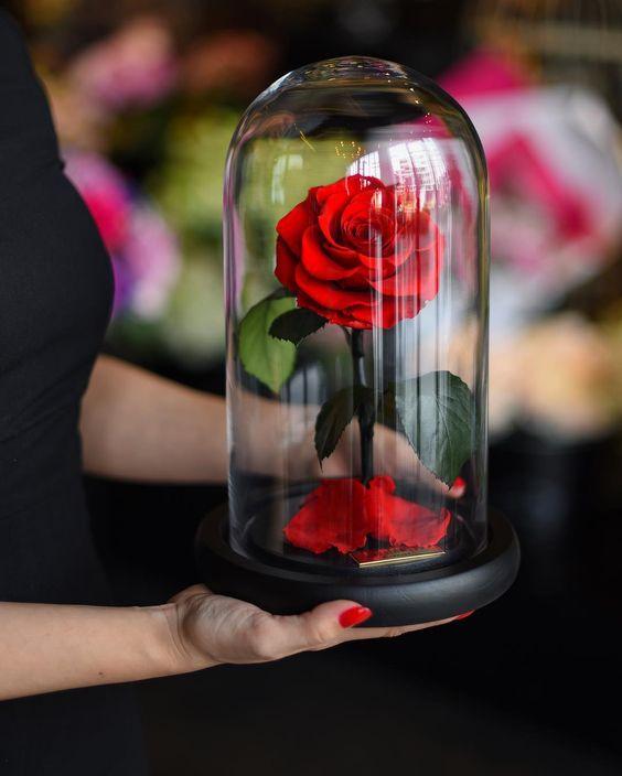 solmayan güller